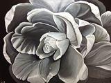 14x18 acrylic black and white rose