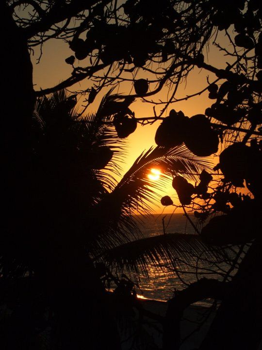 Tropical Sunset - Trish's Paintings & Photography.