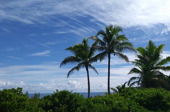 Hawaiian Style - SundayDriver