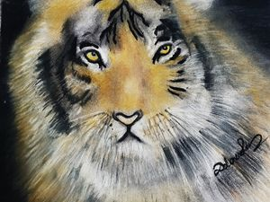 Tiger Soft Pastel Drawing