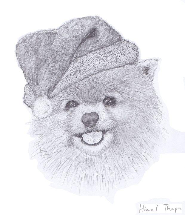 Pomeranian - himal3