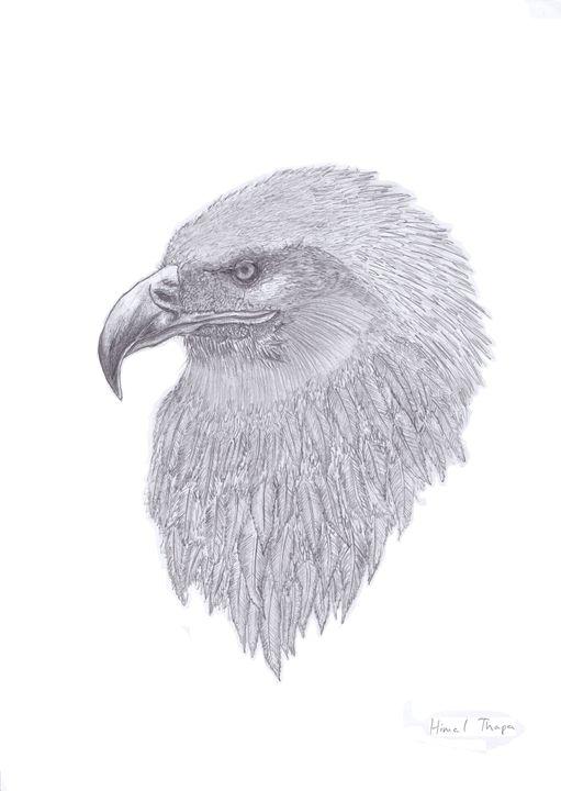 Eagle - himal3