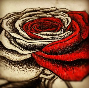 The Black and Red rose