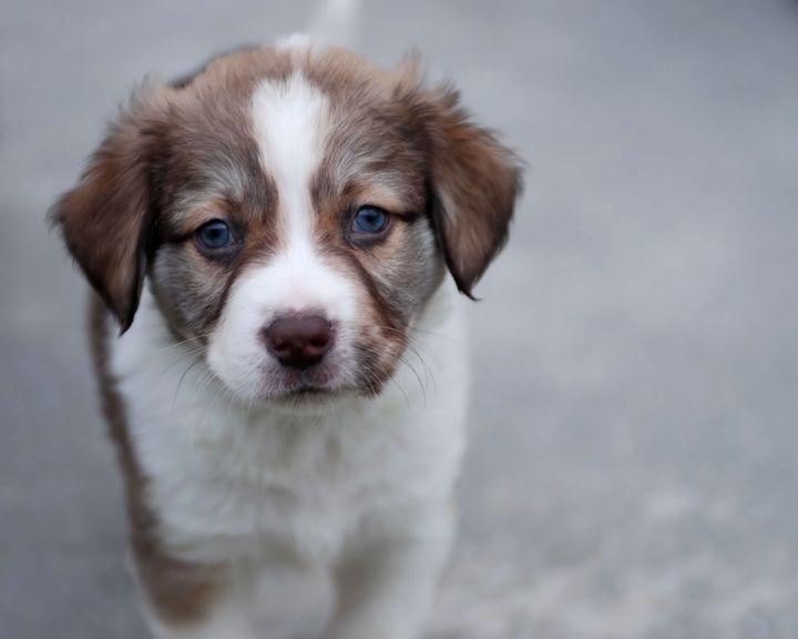 Puppy Love - Animals