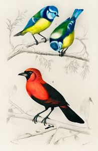 Different types of birds illustrated