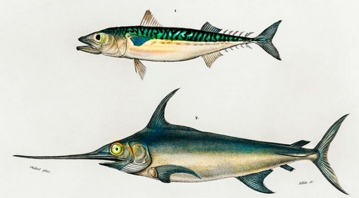 Different types fishes illustrate - Mutlu