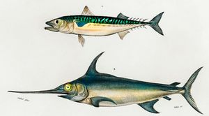 Different types fishes illustrate
