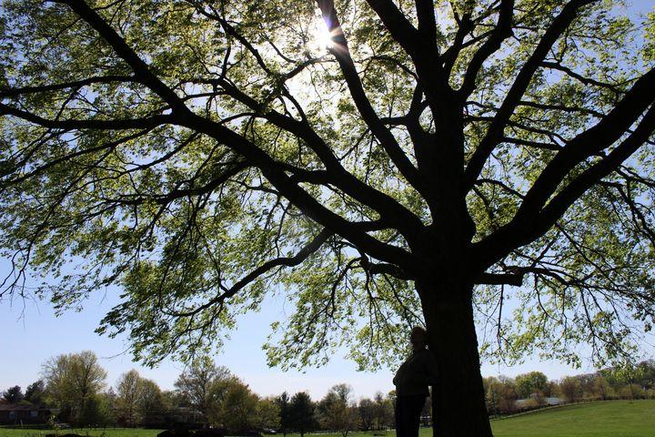 Tree of Light - Nova Arts