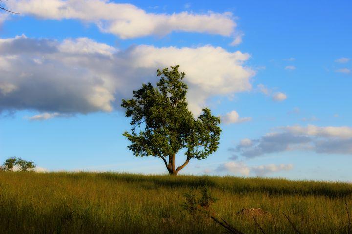 Lone Pear Tree - Nova Arts