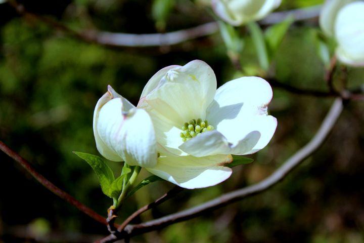 White Flower Nature - Nova Arts