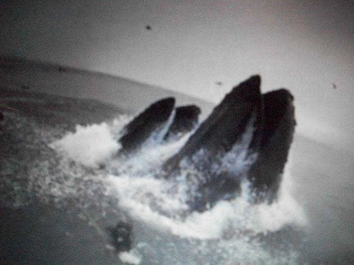 Whales Almost Eats Man - True Elegance Art