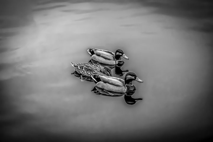 Three Little Ducks - Anita Vincze