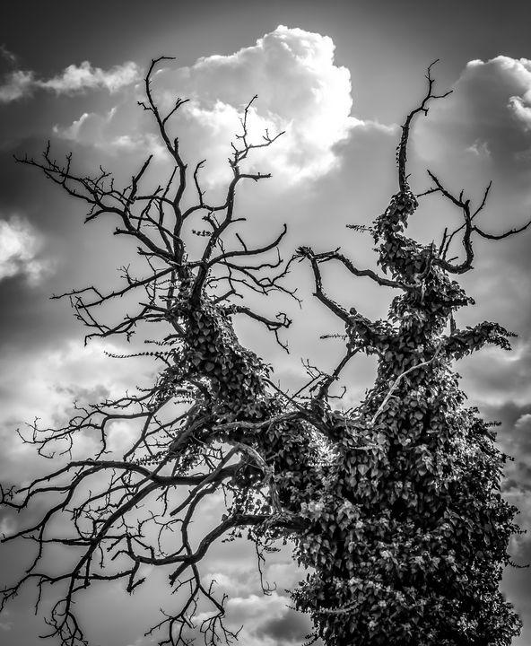 Tree Covered by Ivy - Anita Vincze