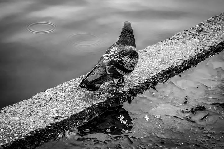 Walk at the Waterfront - Anita Vincze