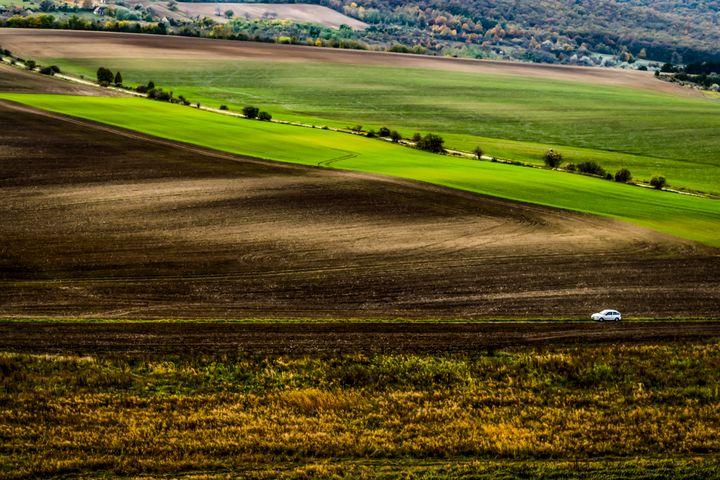 Through the Country Field - Anita Vincze