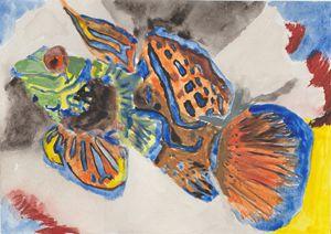 Mandalin Fish