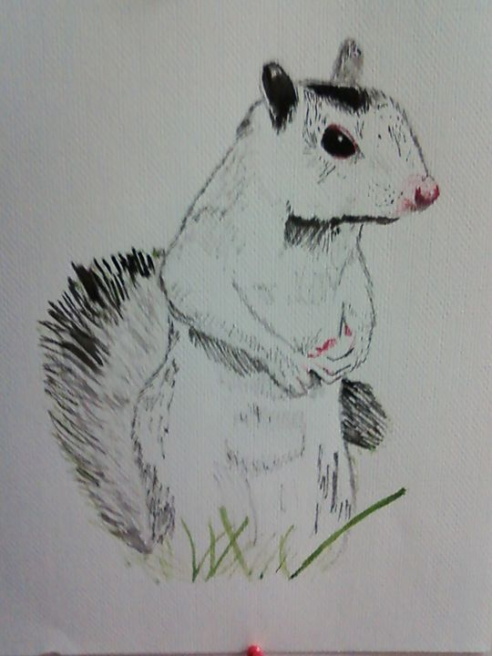 White Squirrel - Candy's Gallery