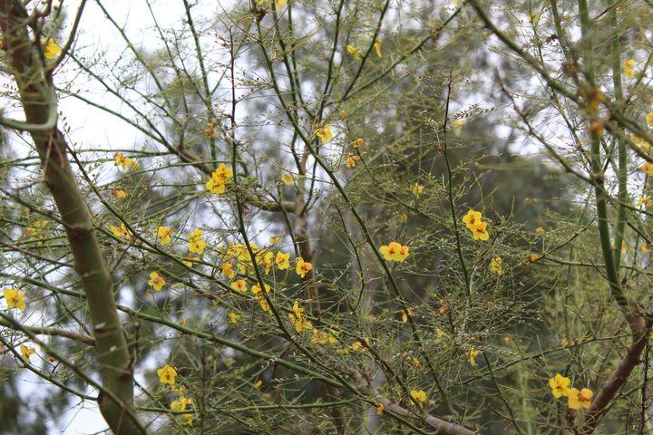 Yellowness - HisChildPhotography