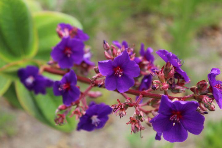 Extended purple - HisChildPhotography