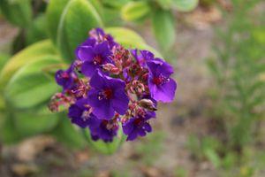 Dark purple - HisChildPhotography