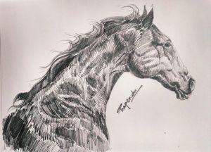 Horse Face-2