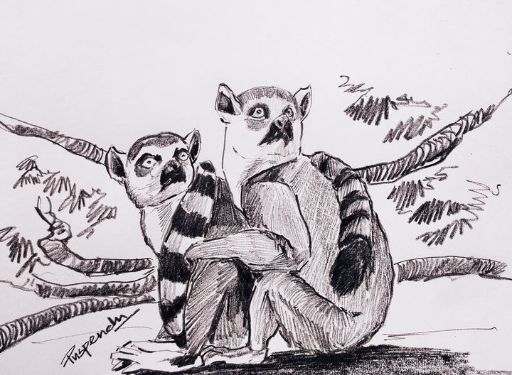 Two raccoons - Puspendu Roy Karmakar