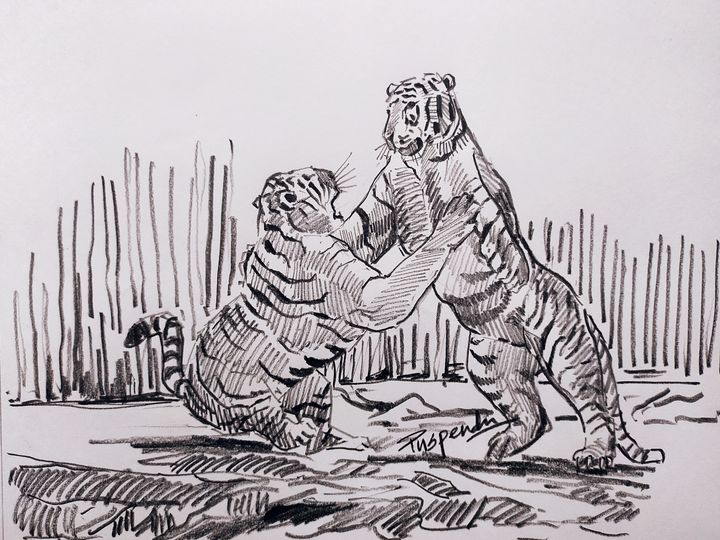 Two tigers fighting - Puspendu Roy Karmakar