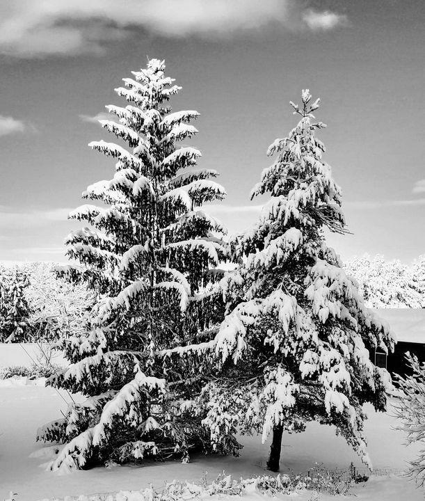 First snow - Barbara Henry