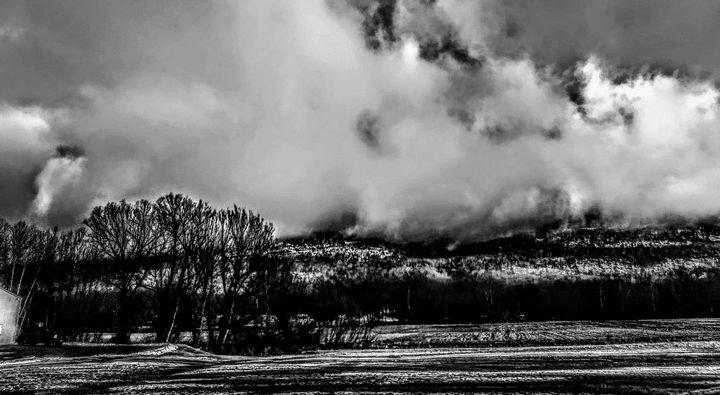 The Fog - Barbara Henry