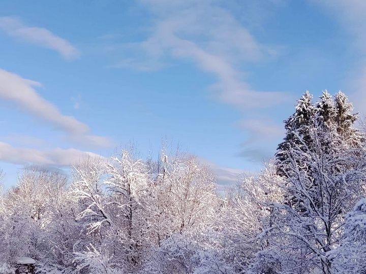 Snow scape - Barbara Henry