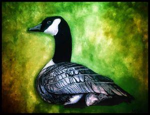 Canada Goose Portrait W/ Boarder