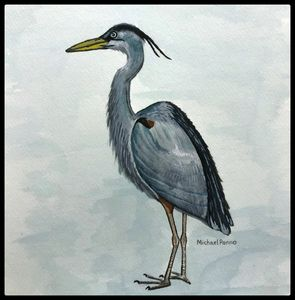 Great Blue Heron W/ Border