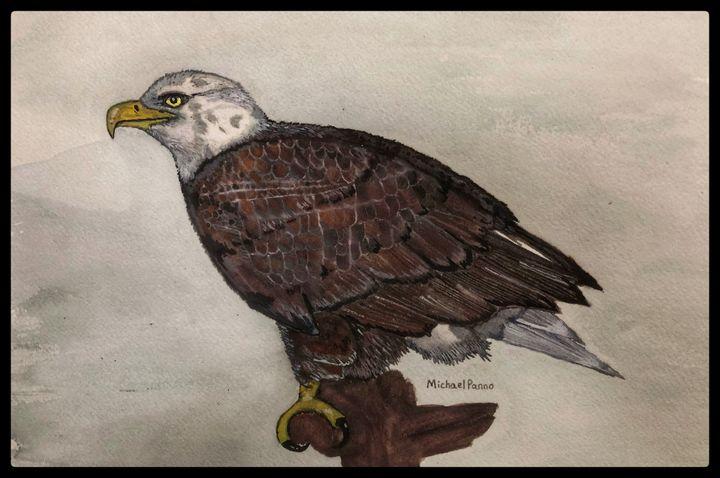 Bald Eagle - Michael Panno