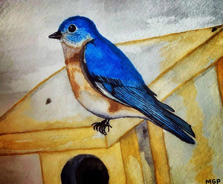 Eastern Bluebird - Michael Panno