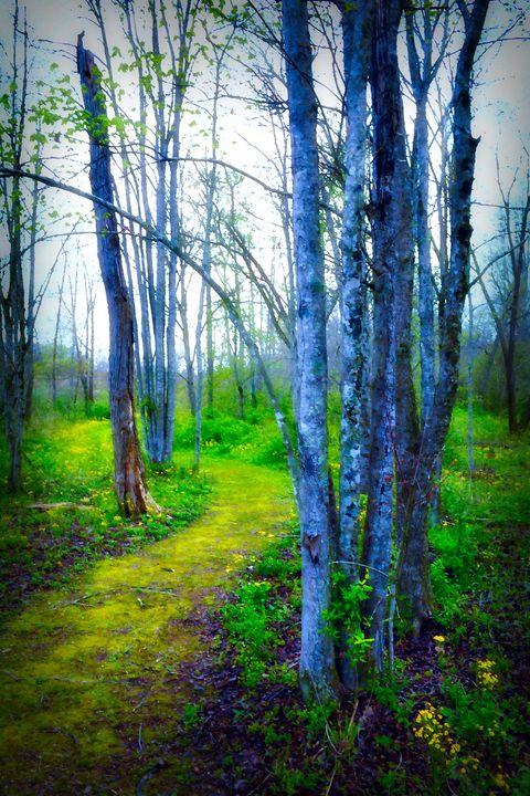 Woodland Walk - Departure & Design