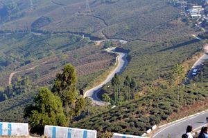 Tea garden road