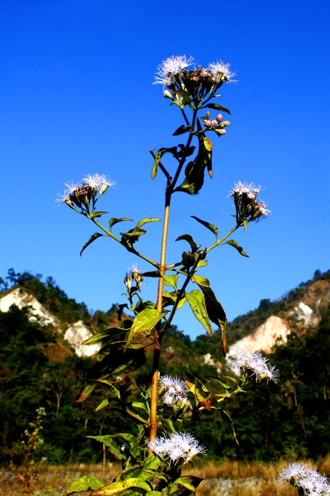 BLUE SKY  AND FLOWER - MUKTI   ART  PHOTO 18