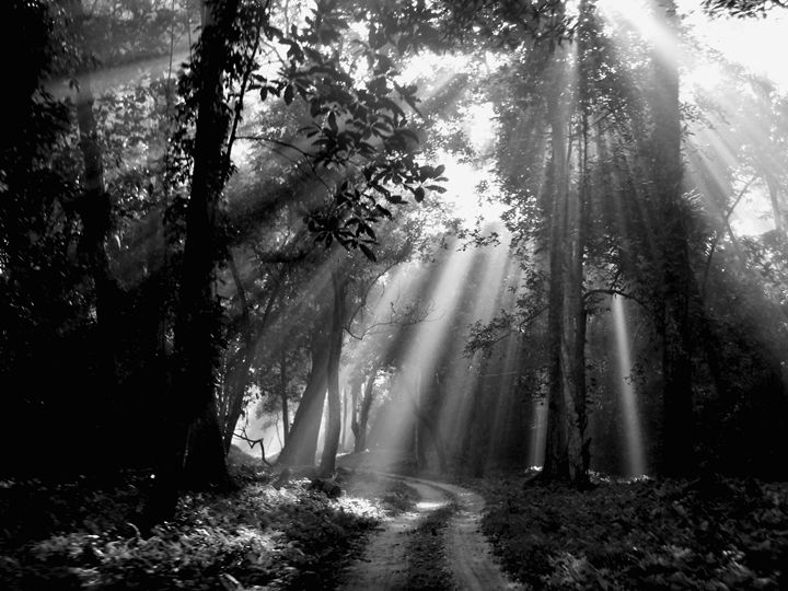 FOREST MORNING - MUKTI   ART  PHOTO 18