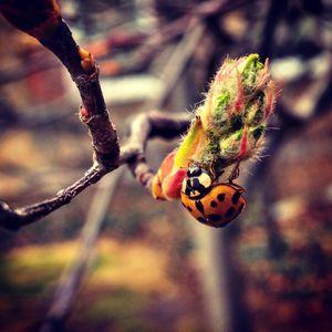 Ladybug Bloom - Amanda Hovseth