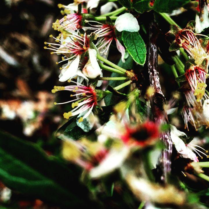 Flowers on Bushes 2 - Amanda Hovseth