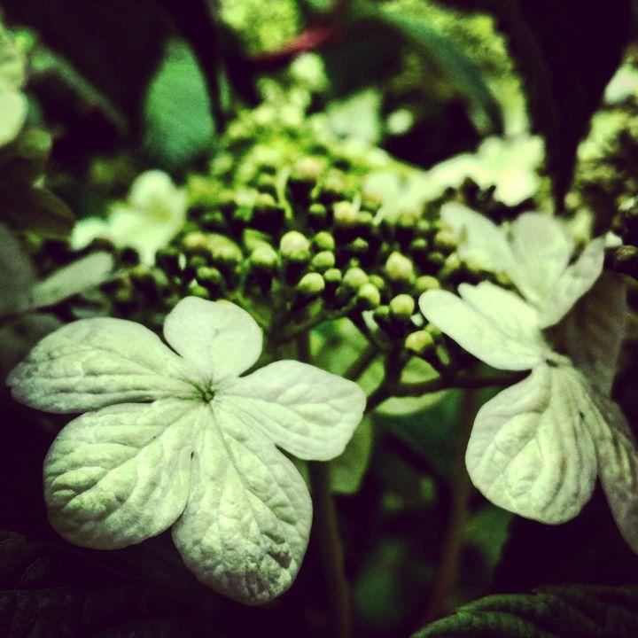 Green Floral Bushes - Amanda Hovseth