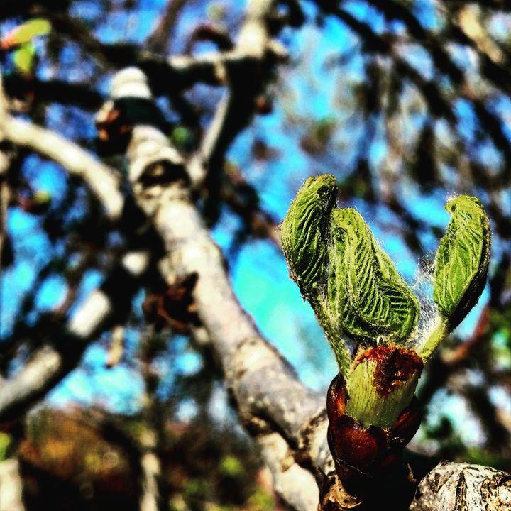 Leaves Unfurling - Amanda Hovseth