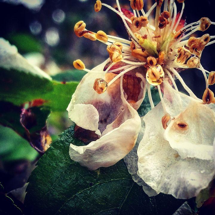 When Rain Washes the Petals Away 4 - Amanda Hovseth