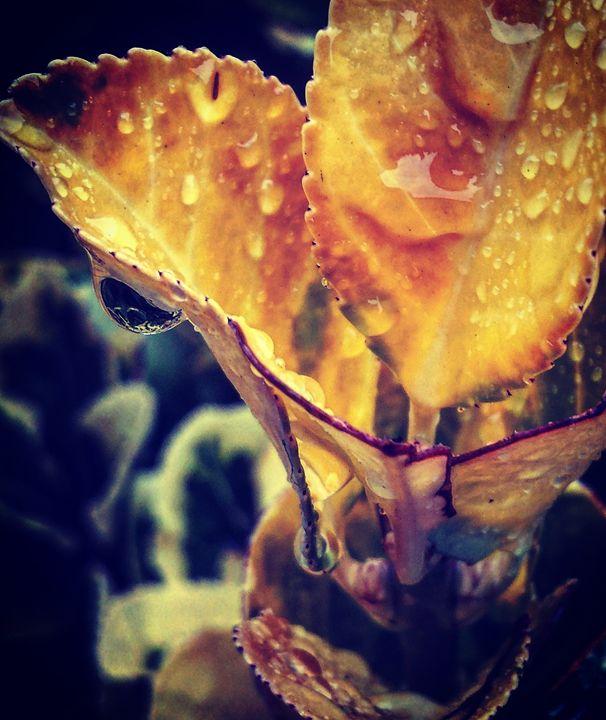 Winter Rain Closeup - Amanda Hovseth