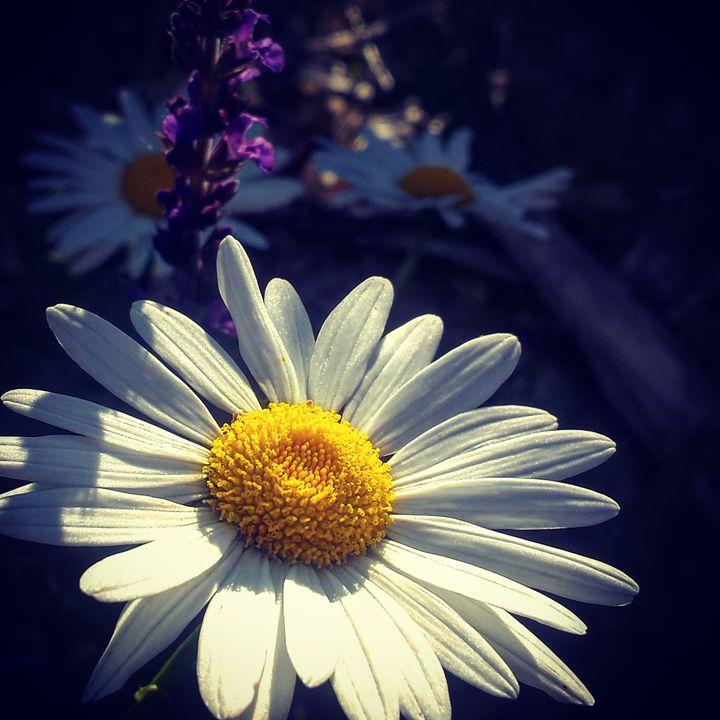 Spring Colors 7 - Amanda Hovseth