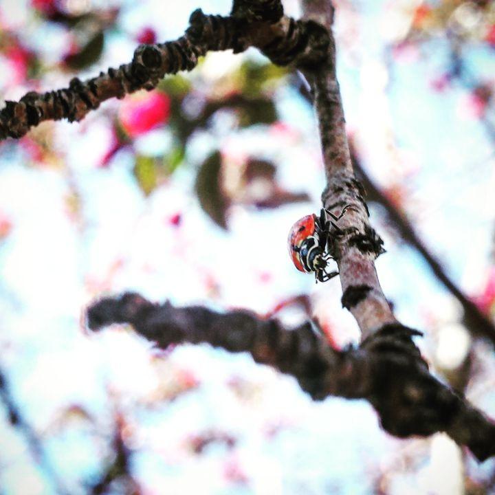 Ladybug - Amanda Hovseth
