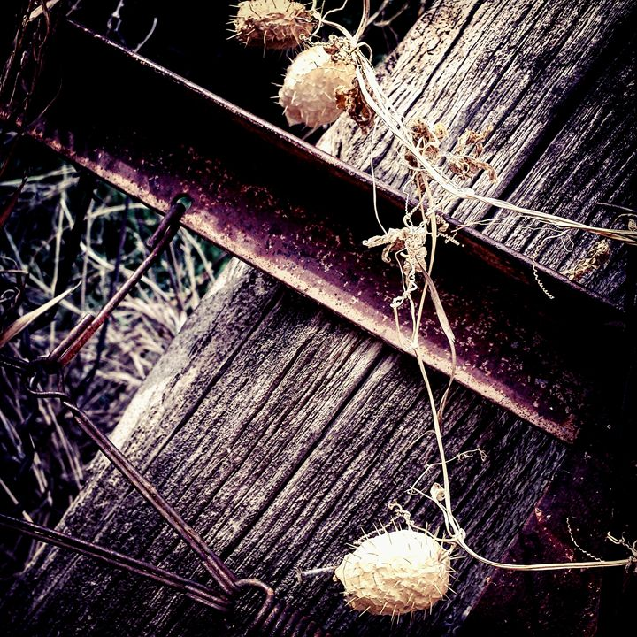 Thorns and Fence Posts 1 - Amanda Hovseth