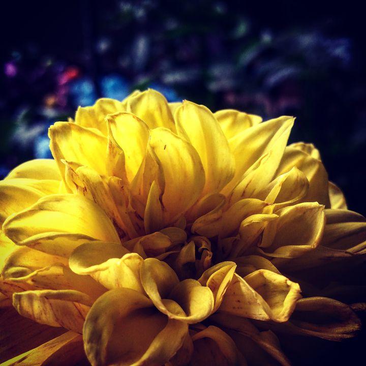 Spring Colors 6 - Amanda Hovseth