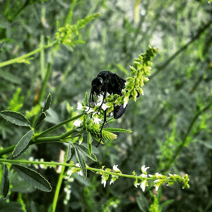 Black Wasp - Amanda Hovseth