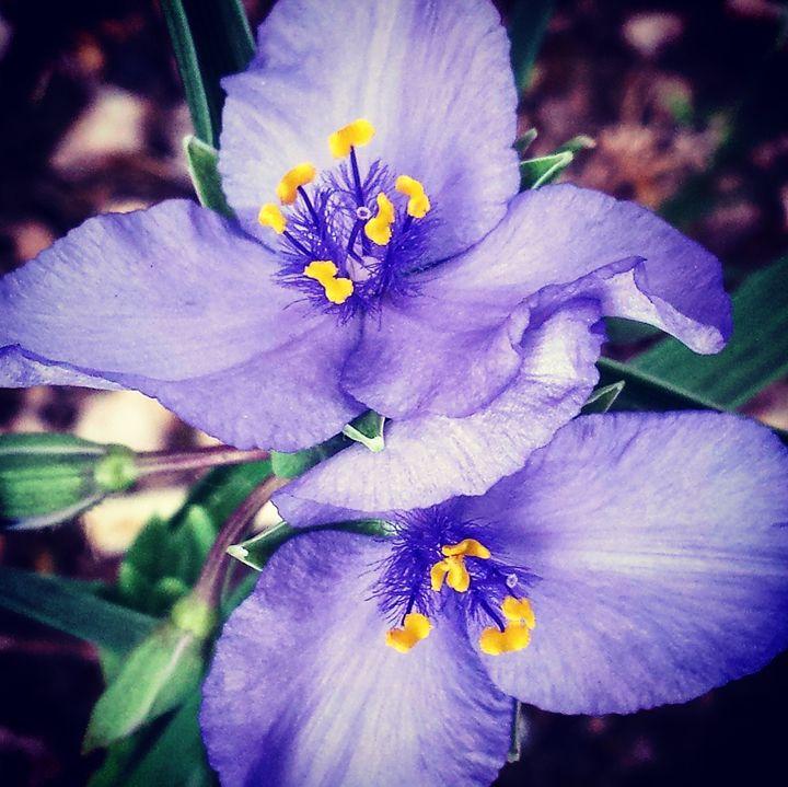 Beautiful Weeds 2 - Amanda Hovseth